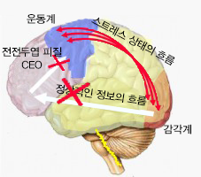 brain-with-stress